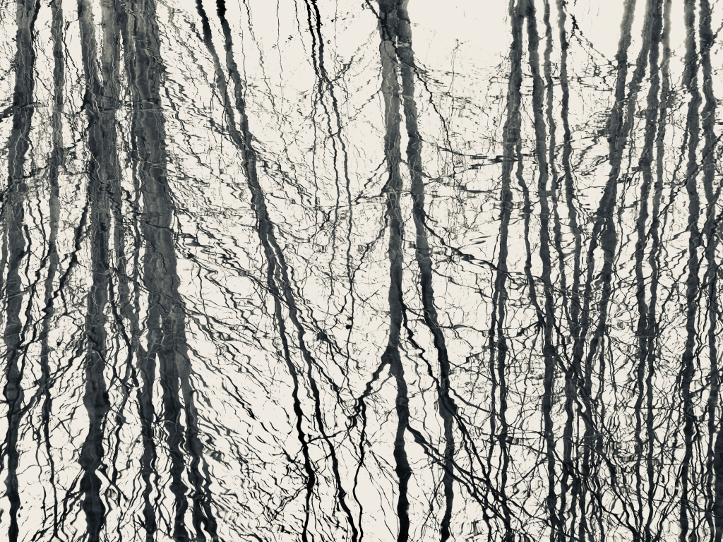 Bare trees reflected in marsh
