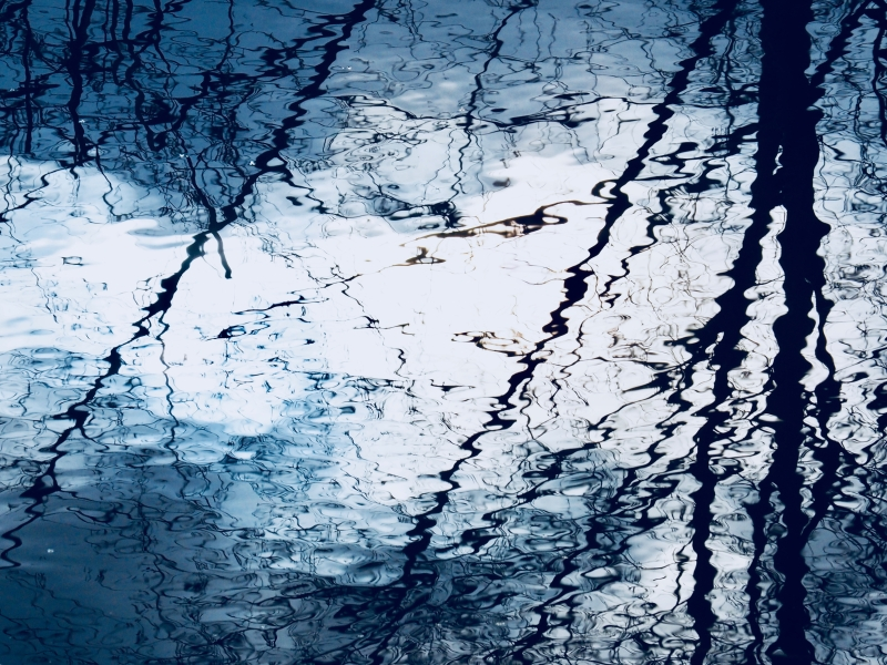 Reflections of bare trees silhouetted in marsh