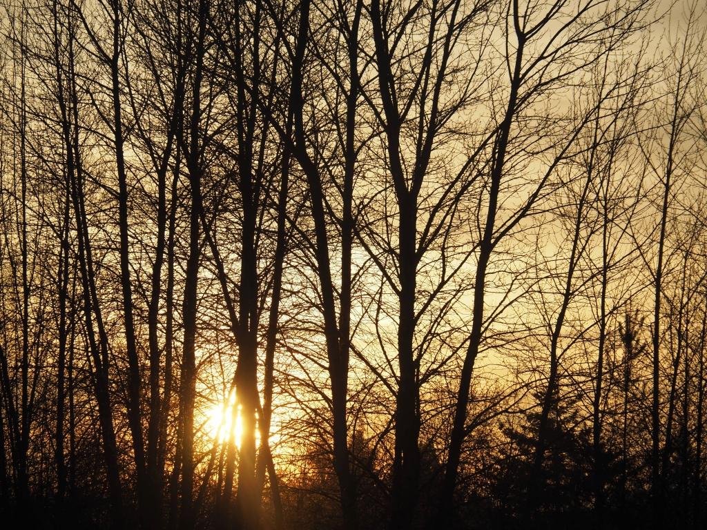 Setting sun glowing through branches of bare trees