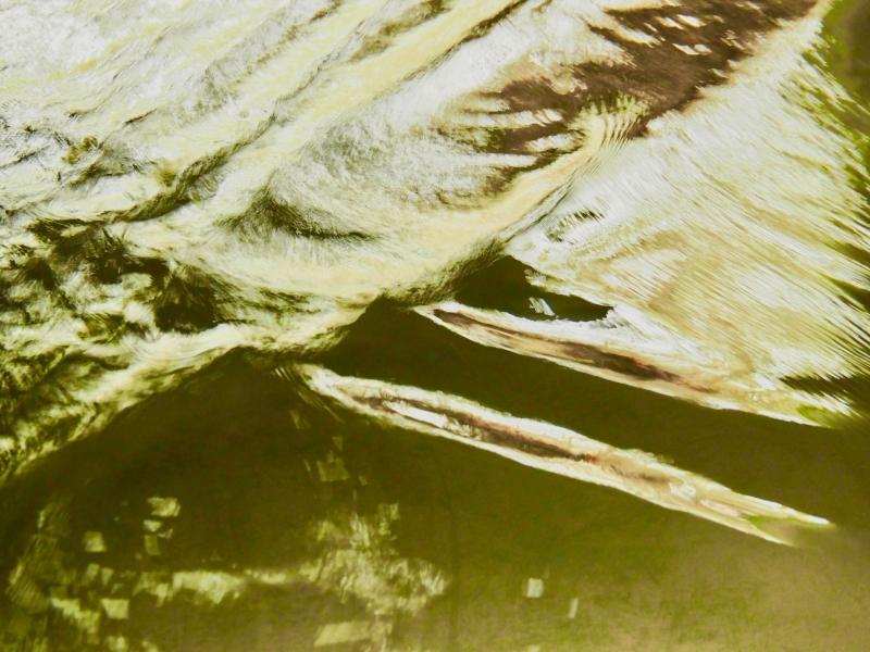 Golden ripples in creek.