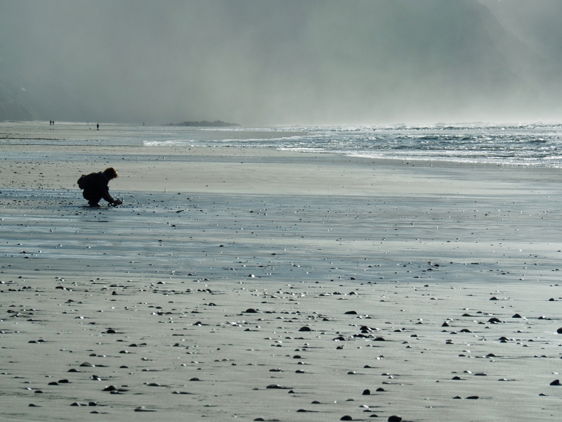 A few people walking and gathering shells on beach