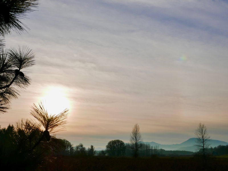 Hazy sun, pines, bare trees and distant blue mountains