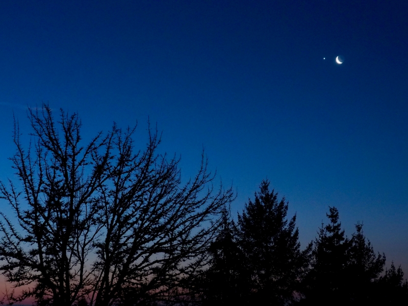 Venus and Crescent Moon in sky over silhouetted trees