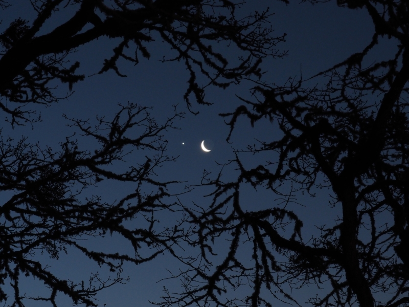 Crescent moon, venus and bare branches in silhouette