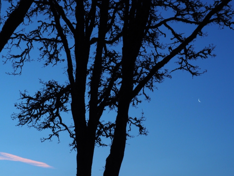 Bare trees and crescent moon in blue sky