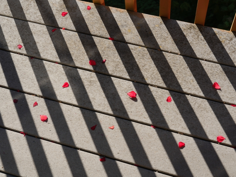 Red flower petals and diagonal shadows on deck