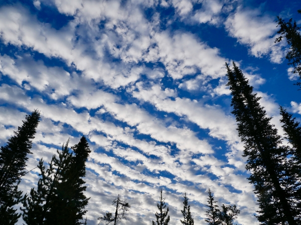 White diagonal clouds in blue sky with tall trees silhouetted