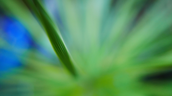 Blurred close-up of green plant