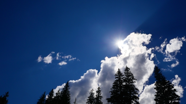 Blue sky, white clouds and tall silhouetted trees