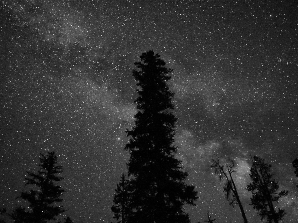 Night Sky with Milky Way and Silhouetted Trees
