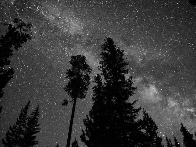 Silhouetted trees and night sky with thousands of stars
