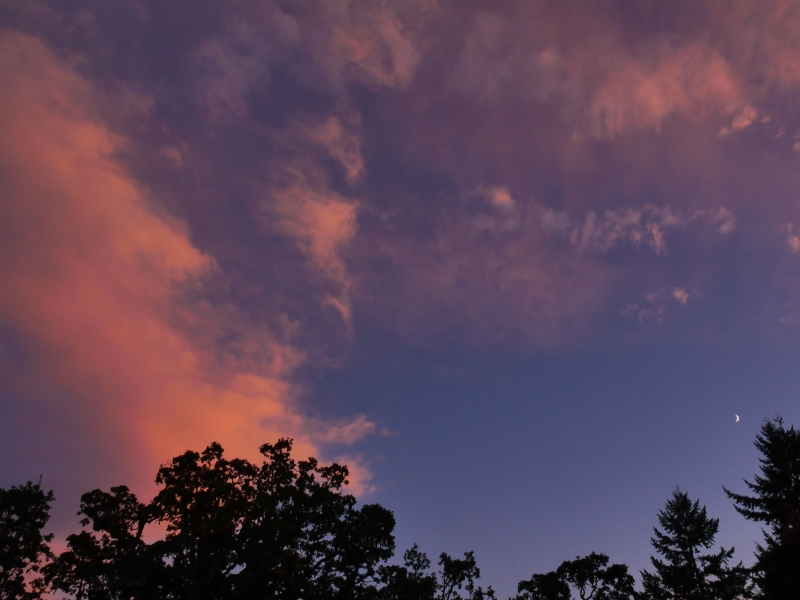 Crescent moon, sky with rosy clouds and silhouetted trees