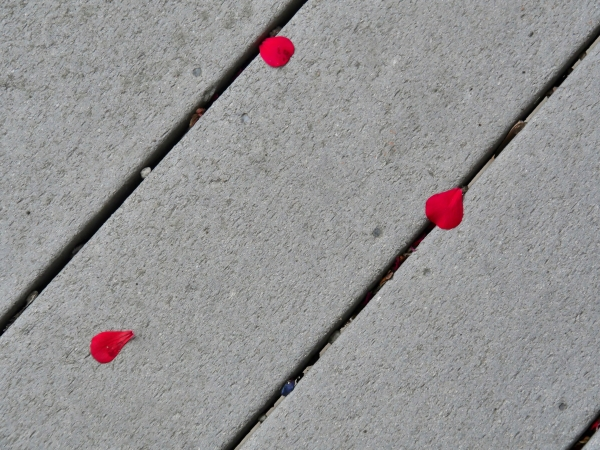 Geranium petals on decking