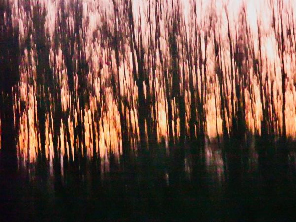Wavy, abstract trees and sky