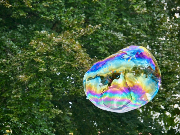 Colorful soap bubble floating in front of ttees