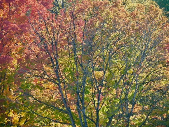 Colorful autumn leaves and tree branches
