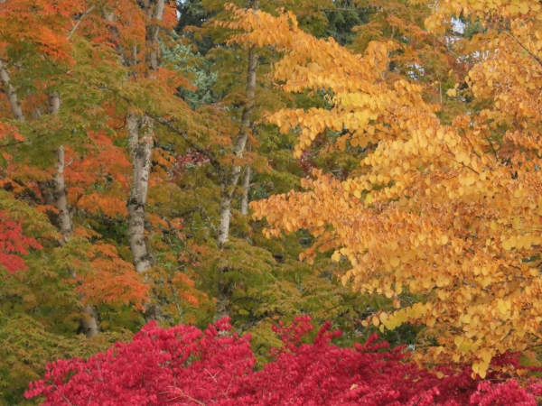 Orange, green, gold and red autumn foliage