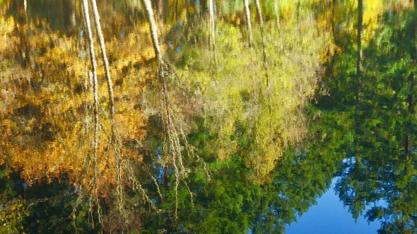 Reflection of autumn foliage and evergreens in pond