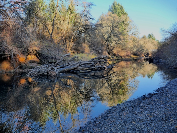 Trees on riverbank and reflections