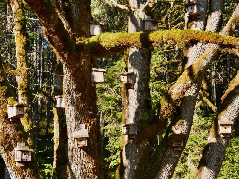 Tree full of birdhouses