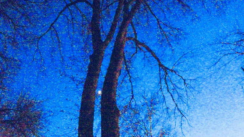 Bare trees, moon and sparkling sky