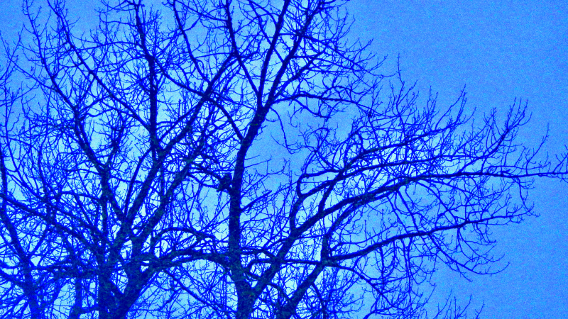 Bare tree and owl silhouette in blue