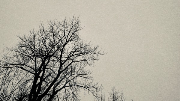 Large owl silhouetted in bare tree