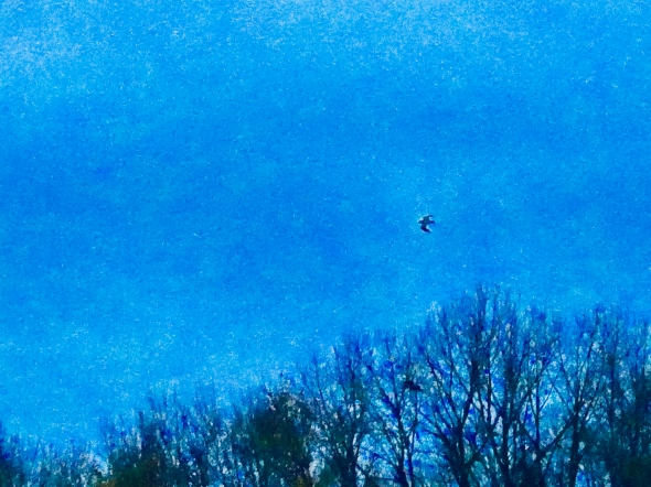 Bird flying above bare trees in dusky blue sky