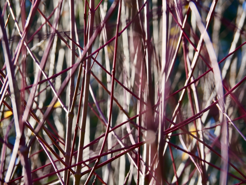 Small pink branches intertwined