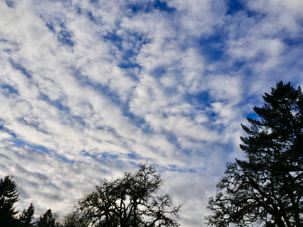White clouds in blue sky with silhouetted trees