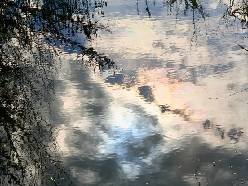 trees reflected in marsh