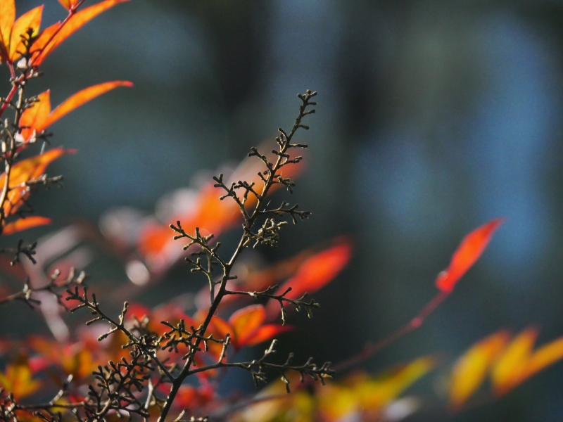 Bare twigs and orange leaves