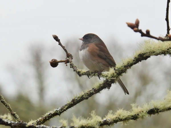 small bird perched on tree branch
