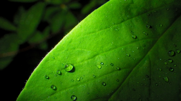 Green leaf with raindrops in darkness