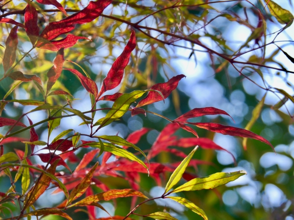red and green leaves