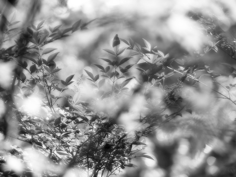 Leaves in black & white