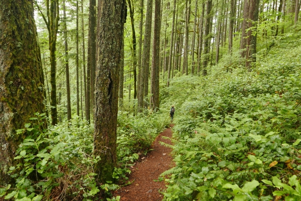 hiker on path through green forest