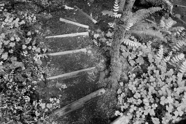Spiralling steps on trail
