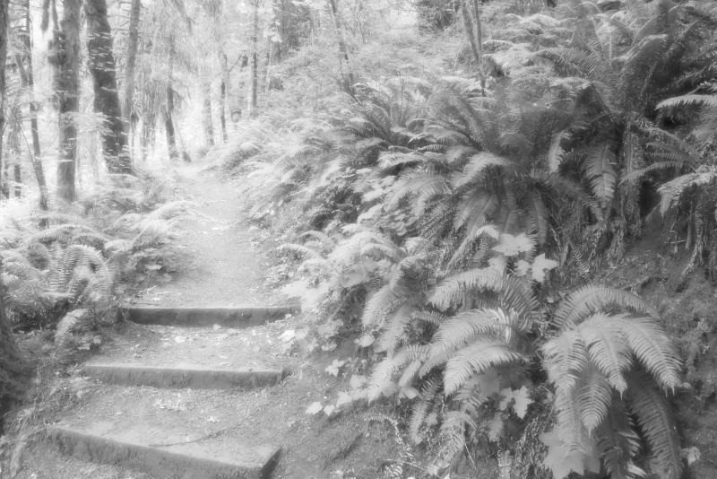steps on trail through forest and ferns