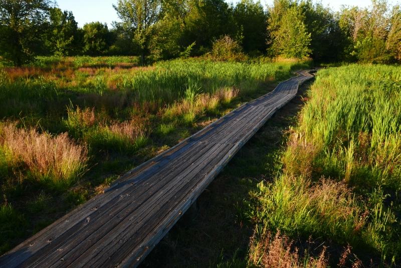 Boardwalk through Cattail Marsh