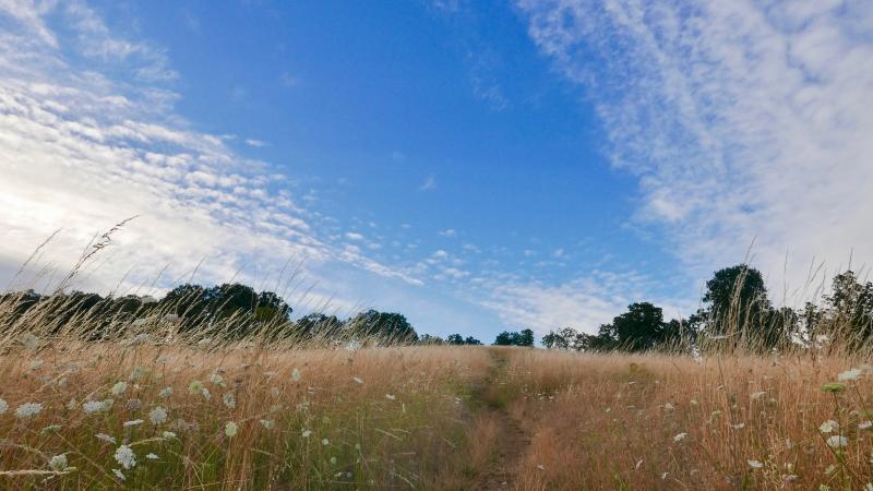 Path through flowery meadow