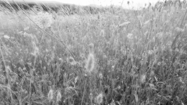 Meadow grasses and flowers in breeze