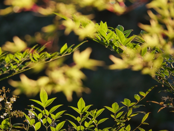 Green and yellow leaves