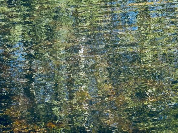 P1015090-reflection-twg-albanyor-27aug2020