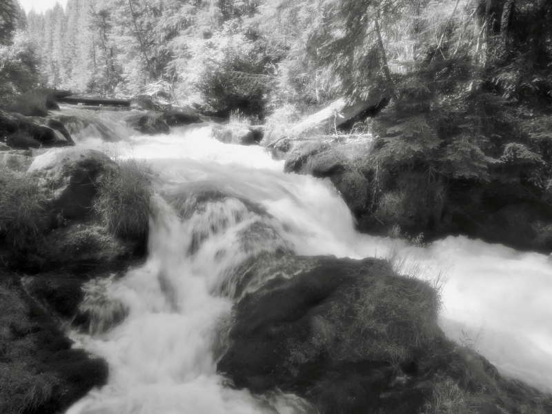 Whitewater river in forest