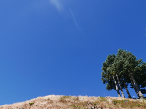 Grassy ridge with fir trees and blue sky