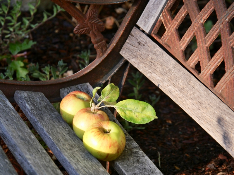 3 apples on a bench