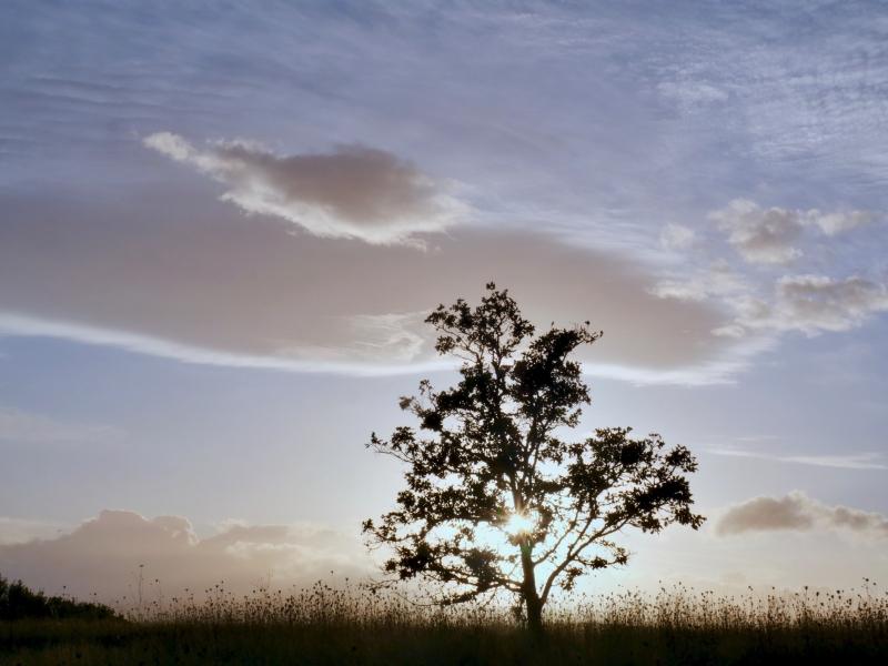 sun setting behind oak tree