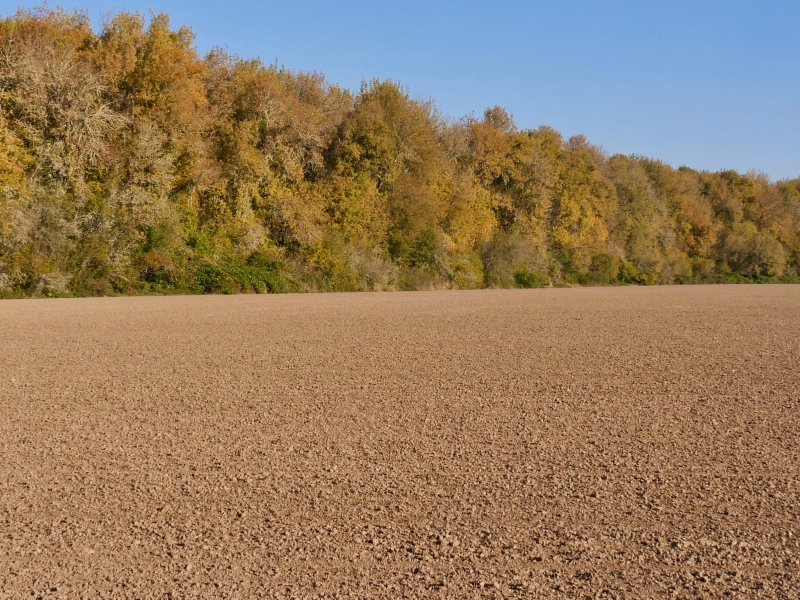 Fall foliage and soil
