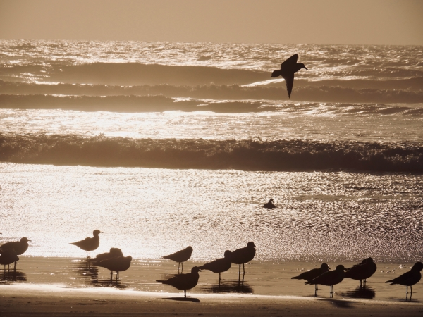 seagulls and surf